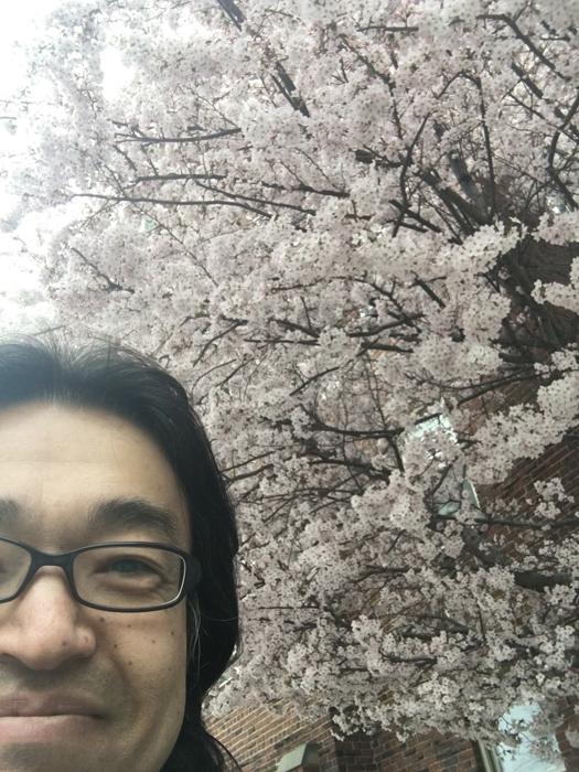 2018桜1.JPG